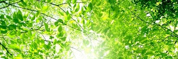 メニエール病の人にすすめたい栄養素:ルスコゲニン(ナギイカダ)