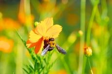 めまい・耳鳴りに効果があるとされる蜂の子